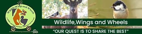 Wildlife Wings and Wheels