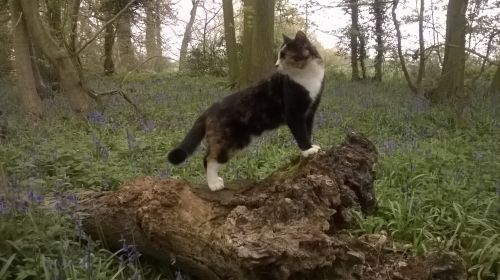 Meet Fizzle the cat that goes for a walk.